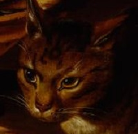 A Cat's face from a Clara Peeters painting.