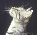 A Cat looking upwards_copyright_Fotolia 13455661