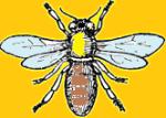 Gib's Bee