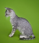 A spotted kitten on a green-colored background