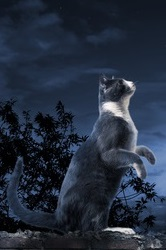 A Lunatick Cat standing in the moonlight.
