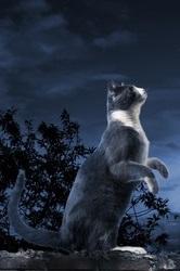 A Lunatick Cat standing in the moonlight.