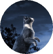 A Cat standing in the moonlight