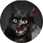 A black cat looking excited