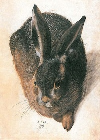 Hare by Hans Hofmann 1528. Adapted from Albrecht Durer's more famous work.