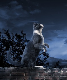 A cat standing on a brick wall, staring at the moon.