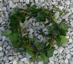 A small wreath of ivy, lying on a gravel path.