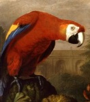 A scarlet macaw, from an eighteenth century painting.
