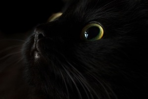 A black cat's face, barely visible, but for the wide-open eyes.