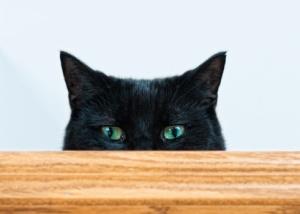 Black Cat (Nero) peeking over a plank.