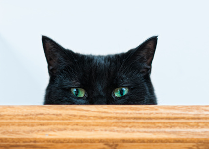 Black Cat (Nero) peeking over a plank.