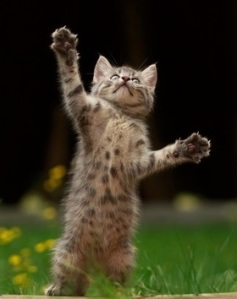 Brown spotted kitten standing on its hind legs in a fun fight.