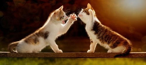 Two kittens play-fighting on a plank of wood.