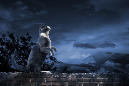 Photo of a cat standing on a wall looking up at the sky