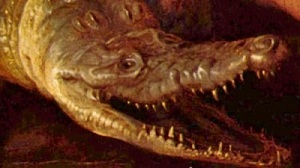 The head of a crocodile.