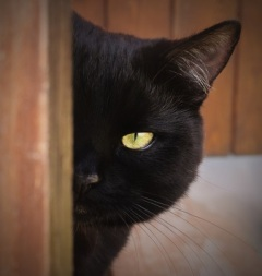 A black cat (Nero) peeking round a door.