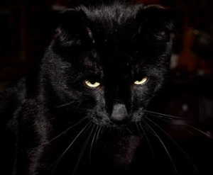 A black cat with narrow yellow eyes, looking thoughtful.