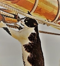 A black and white cat standing on its hind legs to look at ropes and tackle on a sailing ship.