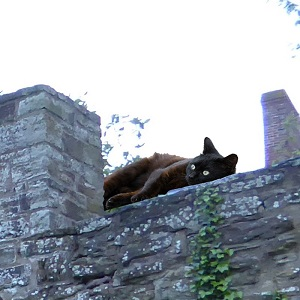 A rusty black cat lying on top of a wall.