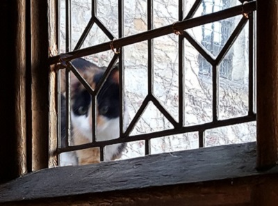 A black, white and orange cat peering through a leaded window-pane.