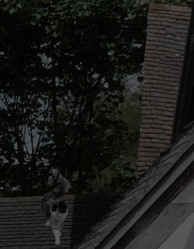 An orange, black and white cat standing on a tiled roof against a background of trees.