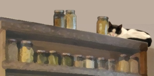 A cat reclining on top of a set of shelves containing large jars of herbs and spices.