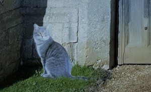 A grey cat seated before a stone wall with a wooden door set into it.