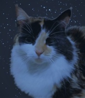 A fluffy black, white and ginger cat against the night sky.
