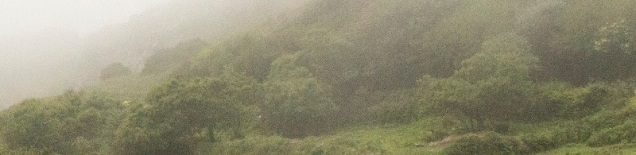 A misty landscape of hills and shrubs, from a photo by David Brooks.