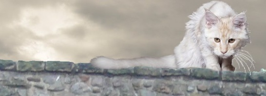 A lean, longish-haired grey cat with a plumy tail sitting on a grey stone wall