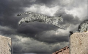 A grey tabby cat leaping across a gap between two stone walls to join its companion.