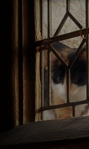 A black, white and orange cat peering in through a lattice window.