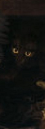 A black cat in darkness - only the eyes are clearly visible.