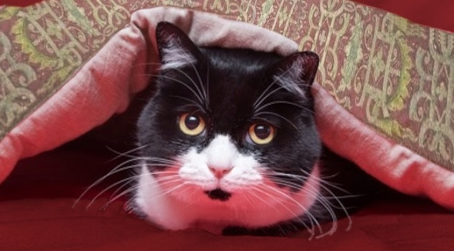 A black and white cat looking out from under an embroidered and padded coverlet.
